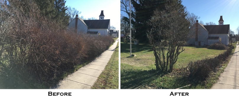 bushes before and after